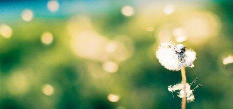 Foto: Pusteblume vor verschwommenem Hintergrund