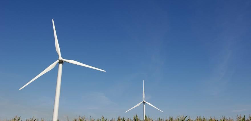 Foto: Windräder in einem Maisfeld