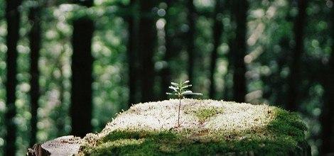 Foto: Pflänzchen im Nationalpark Schwarzwald