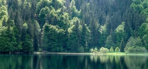 Foto: Schwarzwaldsee