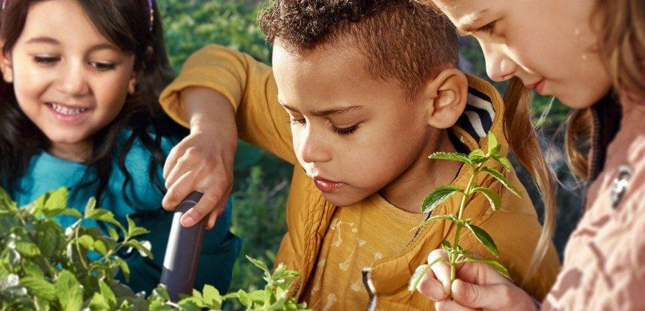 Foto: Drei Kinder beim Gärtnern