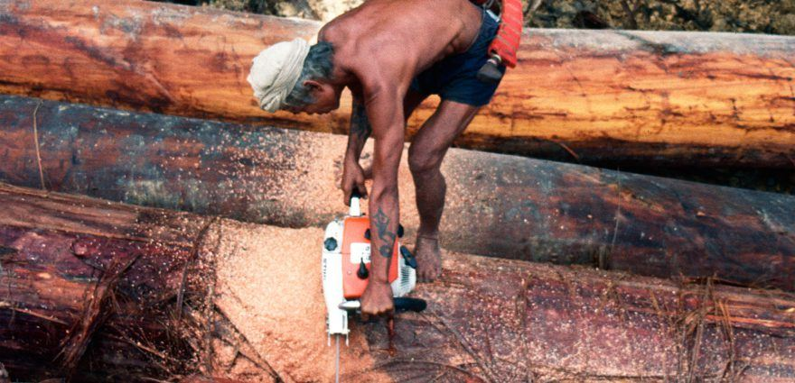 Foto: Waldarbeiter zersägt Baumstämme im Regenwald