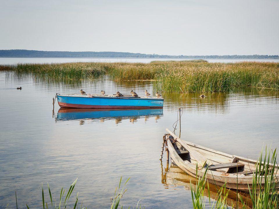 Foto: Boote und Ente auf dem Bodensee