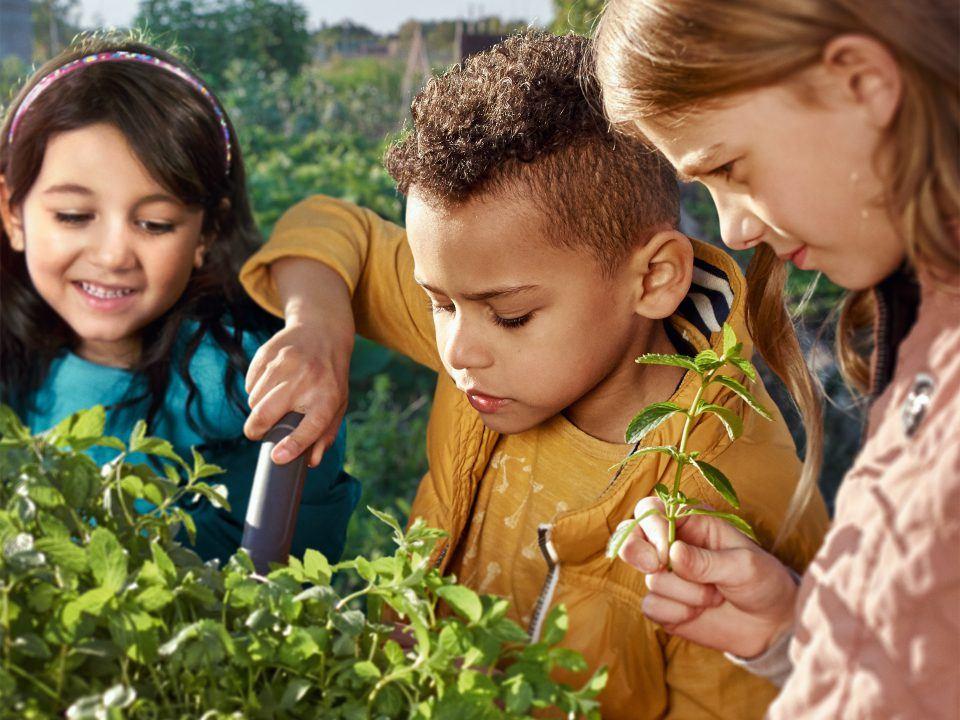 Foto: Drei Kinder pflanzen gemeinsam Minze