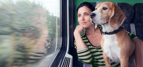 Foto: Hund und Frauchen schauen aus dem Zugfenster