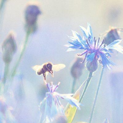 Artenvielfalt statt Insektensterben