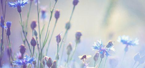 Foto: Biene auf einer Sommerwiese