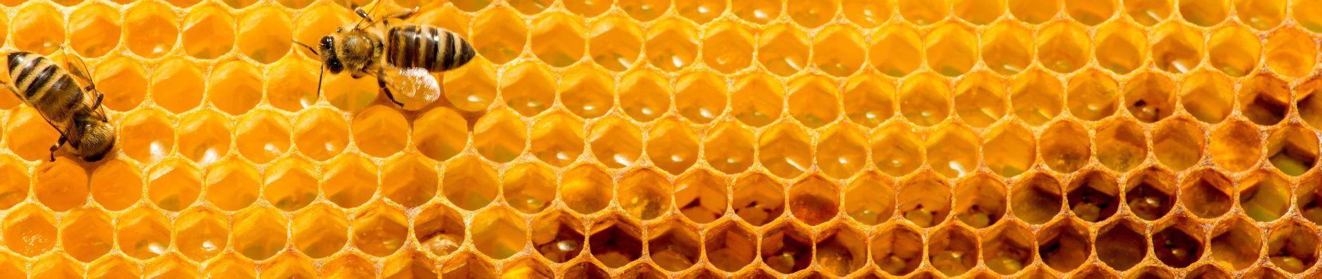 Foto: Bienen auf einer Honigwabe