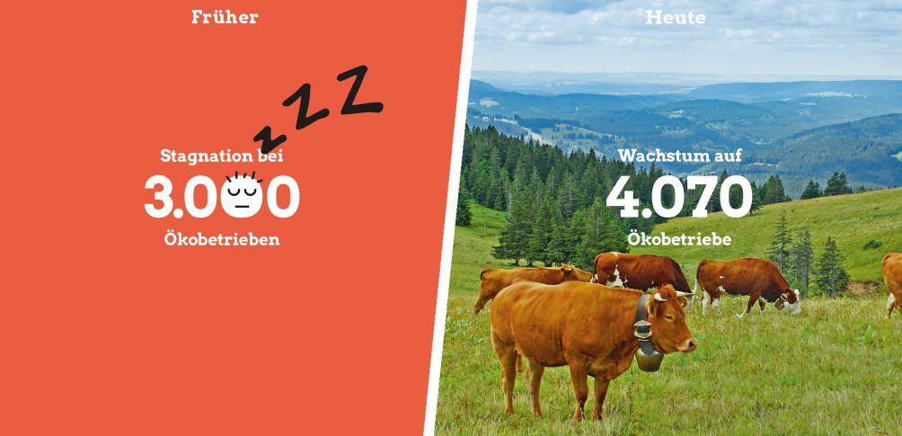 Foto: Kühe auf der Weide im Schwarzwald