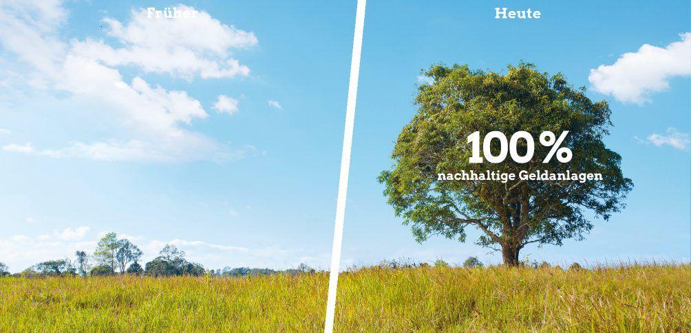 Foto: Baum auf einer Wiese