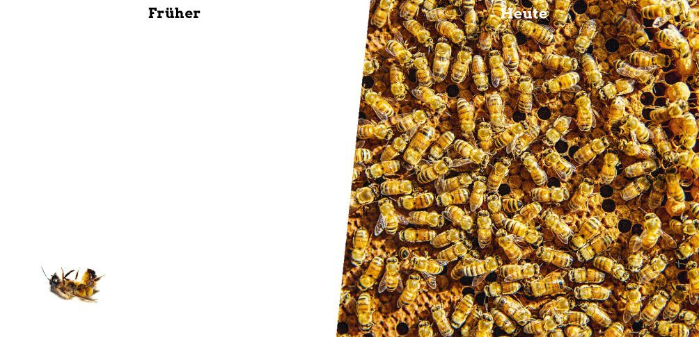 Foto: Viele Bienen auf einer Honigwabe