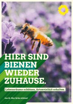 Plakat: Hier sind Bienen wieder zuhause - Biene nascht an Lavendelblüte