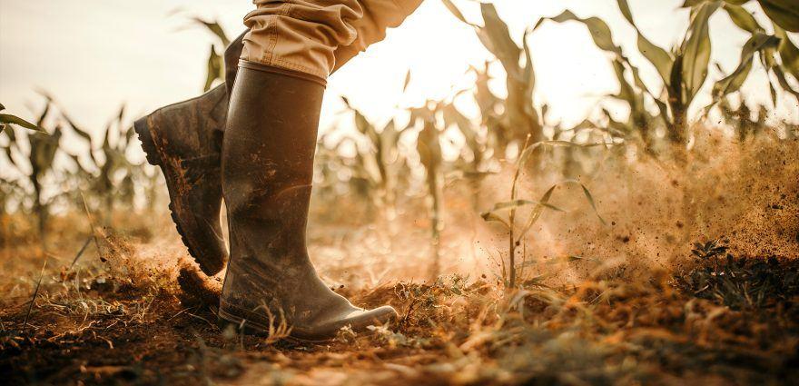 Foto: Bäuerin stapft während Dürre durch ein Maisfeld im Klimawandel