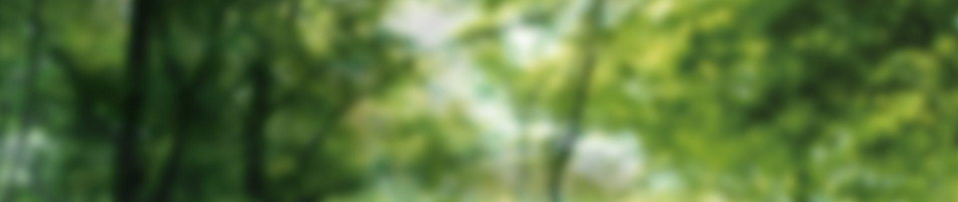 Foto: Waldlichtung