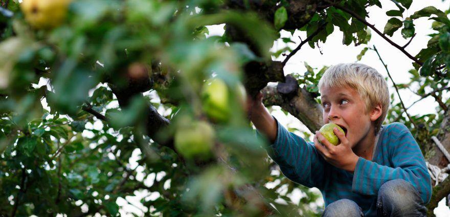 Foto: Junge beisst in einen Apfel
